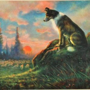 "The Call of ""Shepherd"""